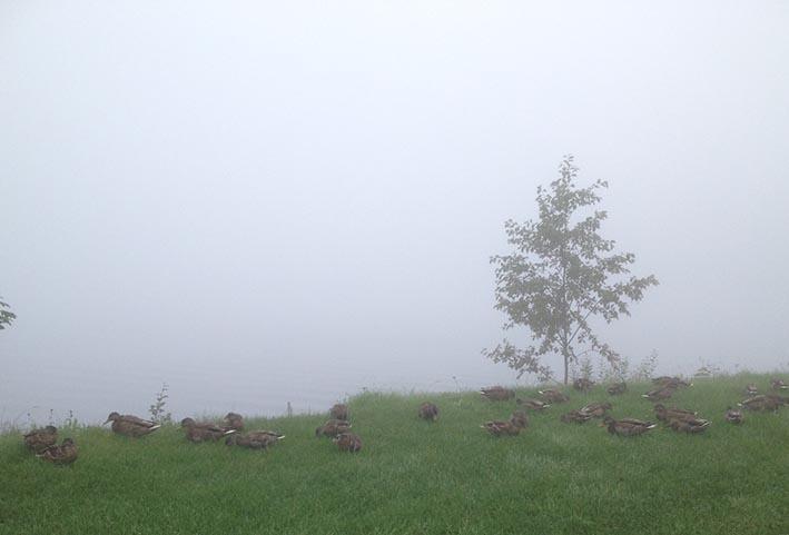 änder i dimma